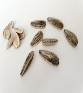 sunflower seeds an alternative to chewing tobacco
